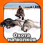 Идет охота на волков....в Канаде